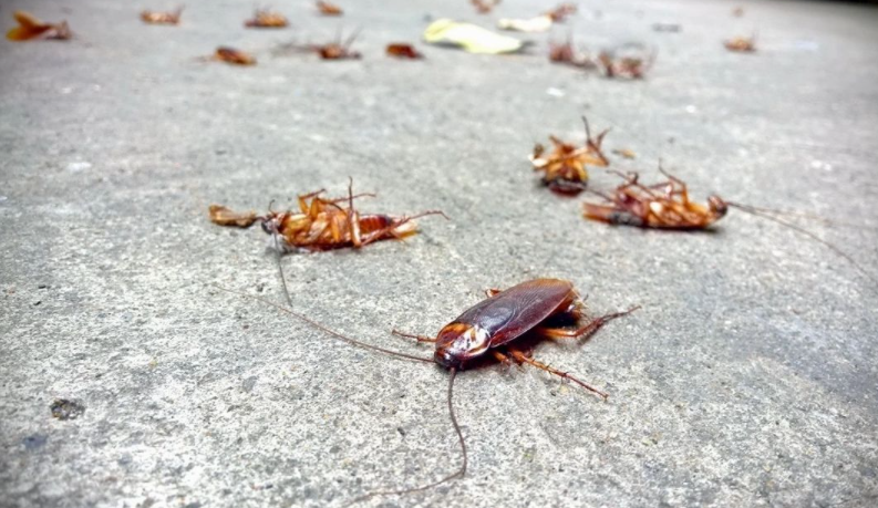 cockroaches pest control